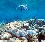 Diving on shallow reefs in warm Caribbean waters of the Florida Keys